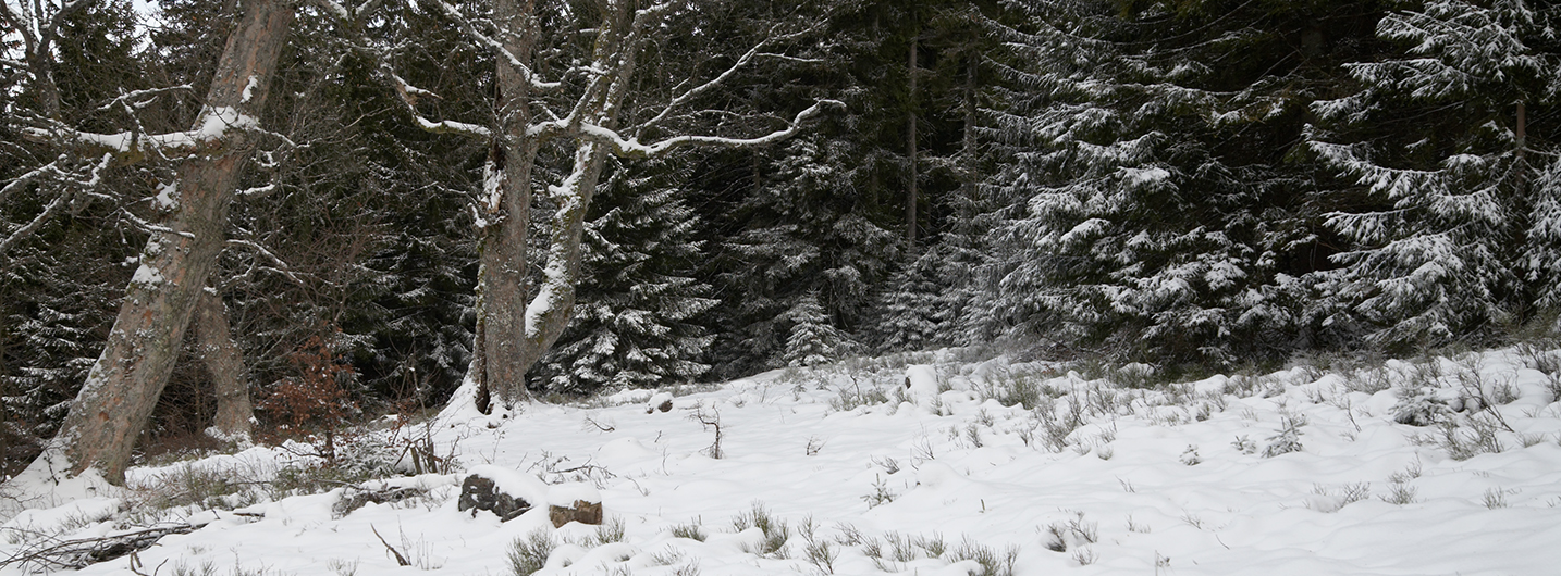 Ruckowitzschachten im Winter, Waldrand nach Norden